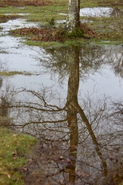 Trees reflected in pools 1
