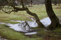 Waterlogged landscape 2