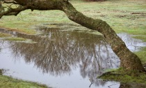Tree reflected in pool 3