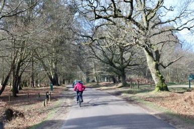 Cyclists on Rhinefield Ornamental Drive 1