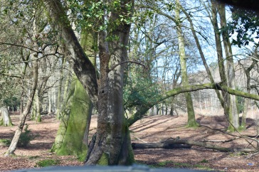 Forest scene 7