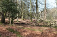 Forest scene 9