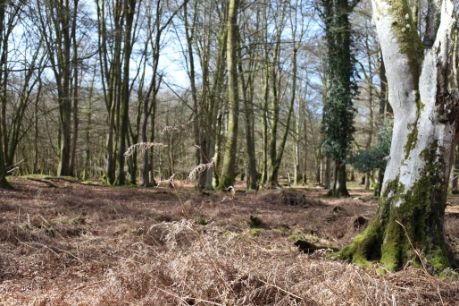 Forest scene with bracken