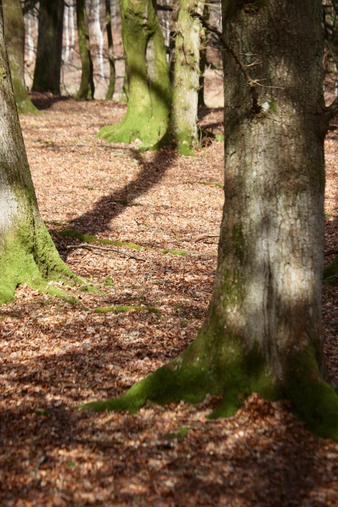 Tree's shadow 2