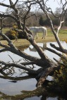 Pony beside pool and gorse 2
