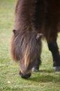 Pony 3