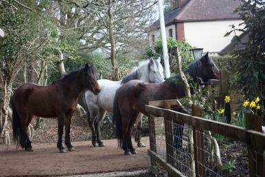 Ponies queueing for lunch 3