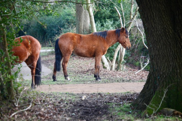 Ponies queueing for lunch 4