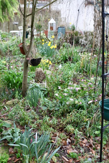 Garden view from Cryptomeria Bed