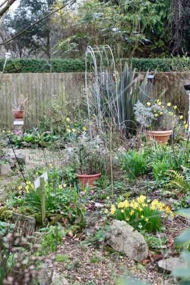 Garden view across Weeping Birch Bed 1