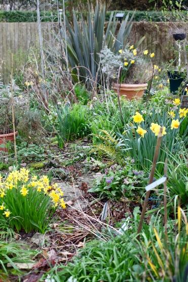 Garden view across Weeping Birch Bed 2