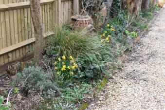 Daffodils and vincas