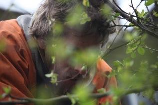 Aaron pruning crab apples 3