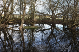 Trees reflected 5
