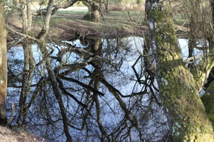 Trees reflected 6