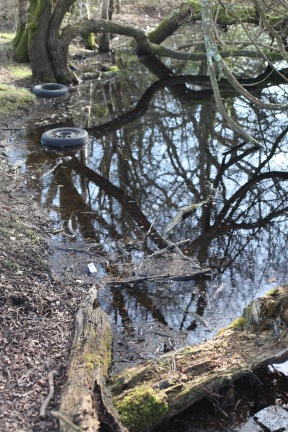 Trees reflected and tyres 2