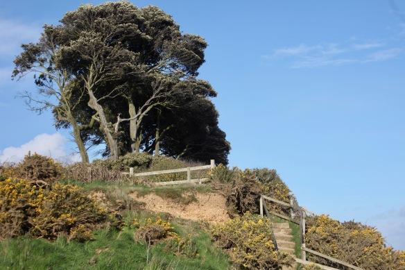 Clifftop landscape