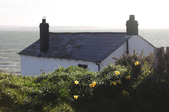 Daffodils and Watch House 1