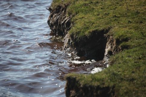 Whitten Pond 2