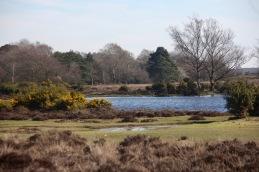 Whitten Pond 5