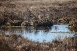Moor around Whitten Pond 2