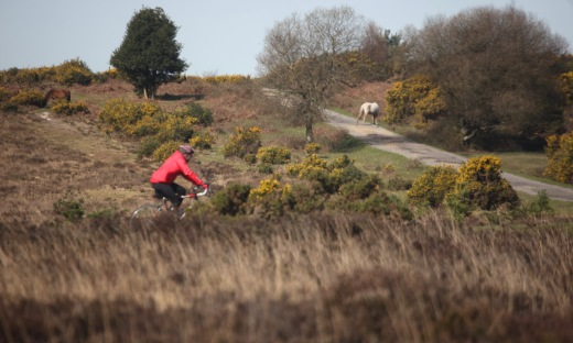 Cyclist and ponies