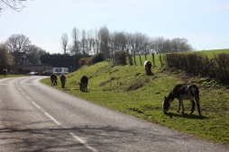 Donkeys and ponies 1