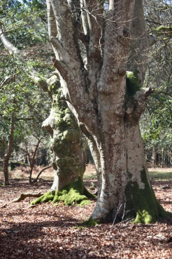 Forest Scene 5