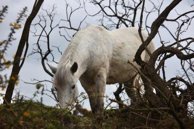 Pony on bank 1