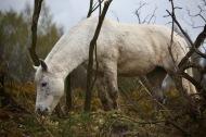 Pony on bank 3