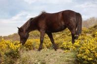 Pony on bank 4