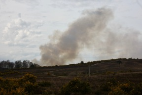 Landscape with controlled burning
