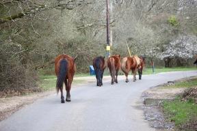 Ponies on road 1