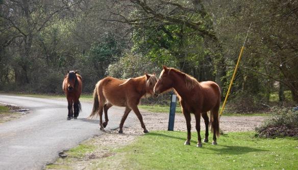 Ponies on road 4