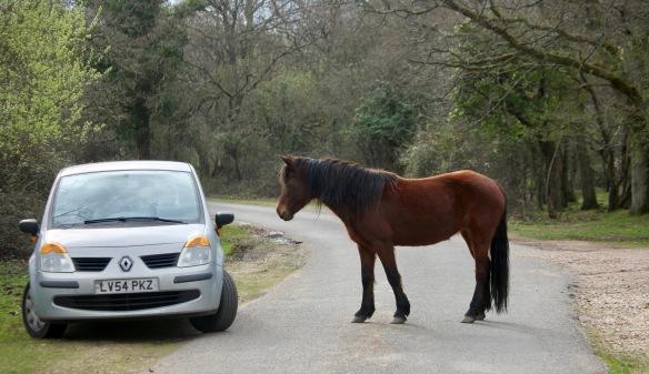 Pony and Modus