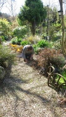 Aaron weeding path 2