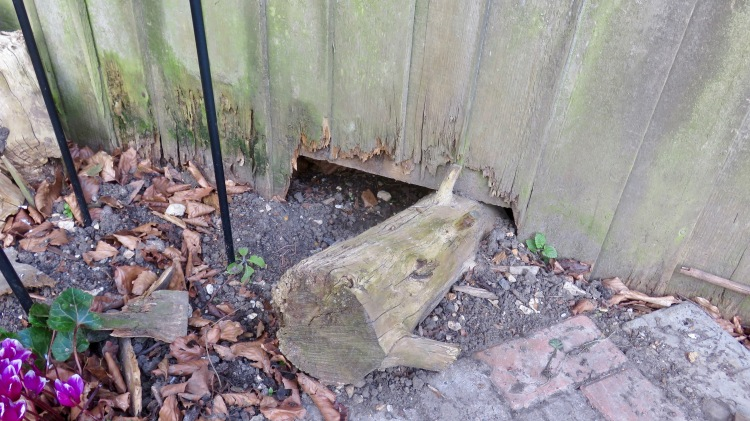 Hole in fence
