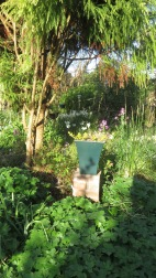 Garden from Rose Garden through Cryptomeria Bed