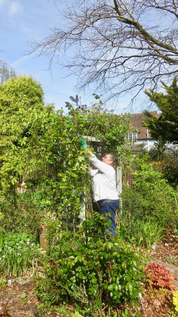 Jackie tying up roses