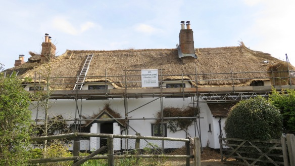 Thatching progress 1