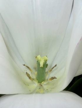 Bugs in tulip 2
