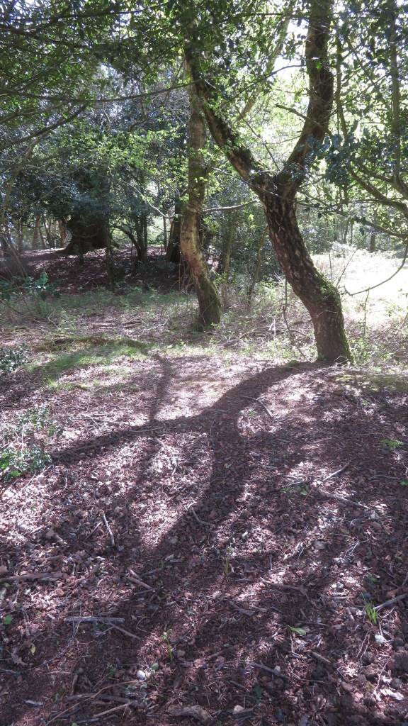 Woodland Shadows 1
