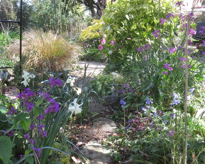 Garden view across Cryptomeria Bed stepping stones 2
