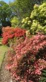 MacPenny's garden 4