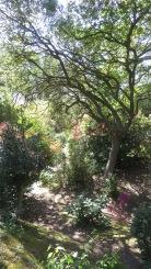 MacPenny's garden 5
