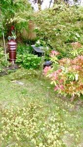 Pruned maple 1