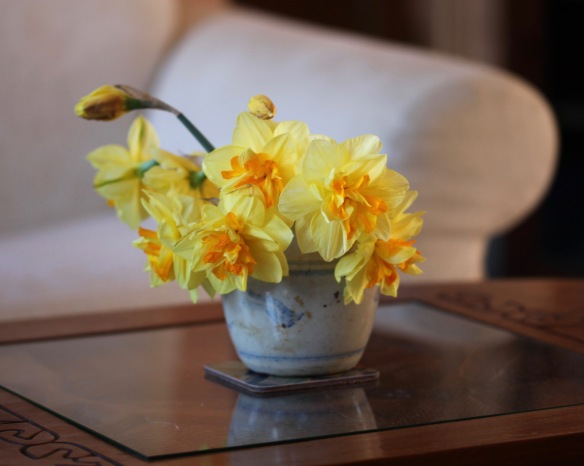 Daffodils in ginger jar