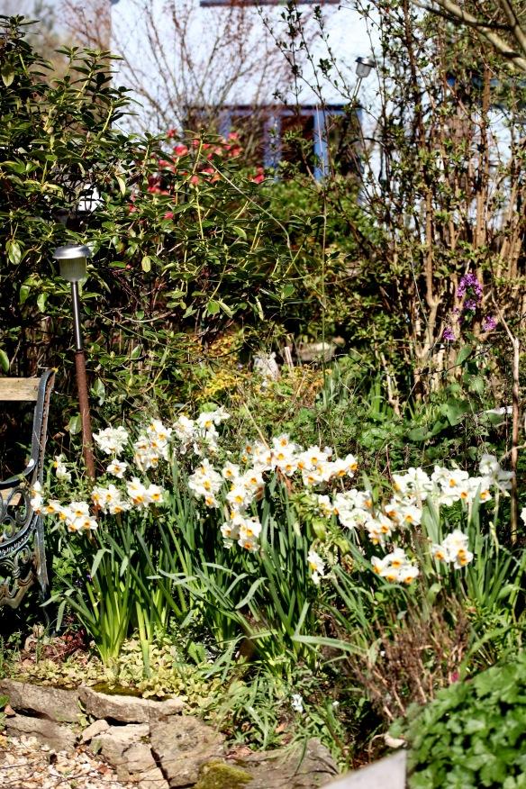 Garden across Cryptomeria Bed
