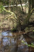 Stream and reflections 1