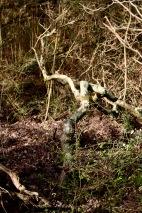 Woodland scene 1